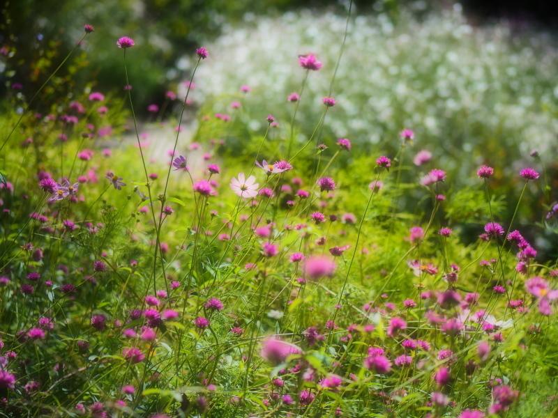 Autumn Garden2_e0169421_21021967.jpg