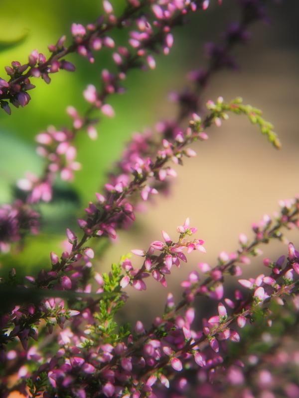 Autumn Garden2_e0169421_21021982.jpg