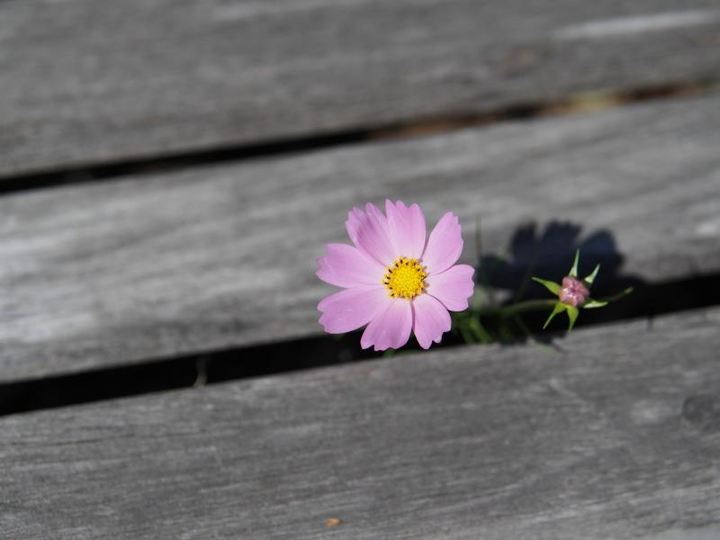 Autumn Garden2_e0169421_21022054.jpg