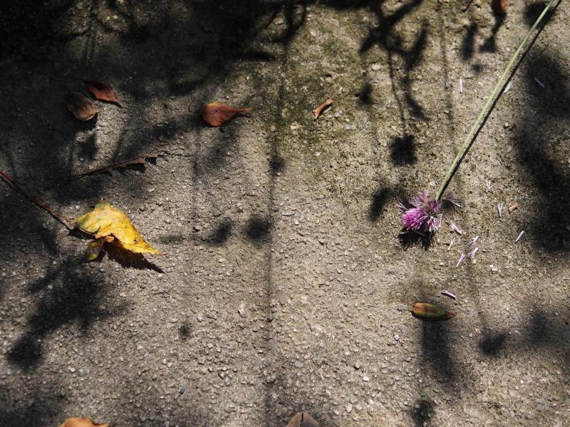 Autumn Garden2_e0169421_21022058.jpg