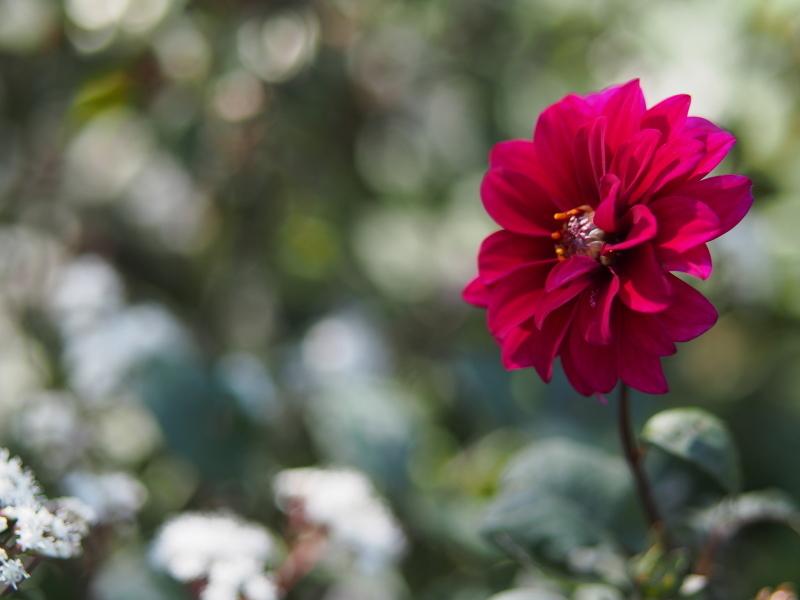 Autumn Garden2_e0169421_21022154.jpg