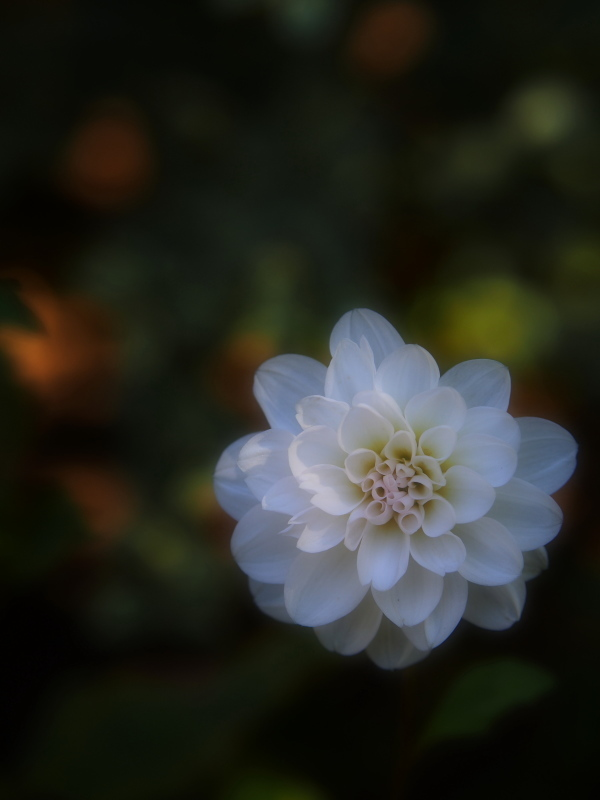 Autumn Garden2_e0169421_21022180.jpg