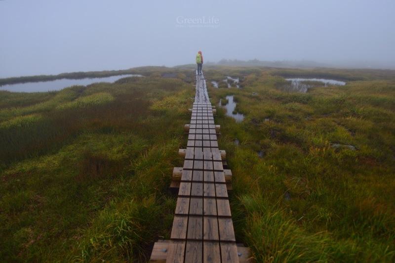 霧中散歩_f0321522_09423036.jpg