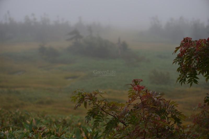 霧中散歩_f0321522_10015008.jpg