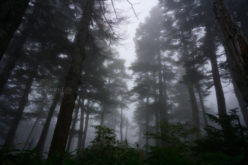 霧中散歩_f0321522_10114819.jpg