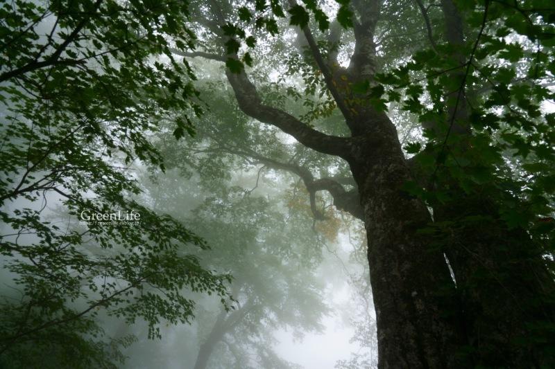 霧中散歩_f0321522_10130038.jpg