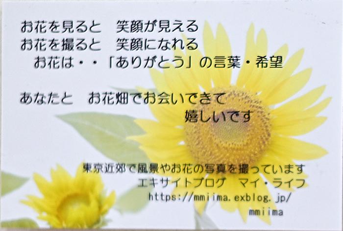 マイ・ライフさんのお花畑_d0265224_19220582.jpg