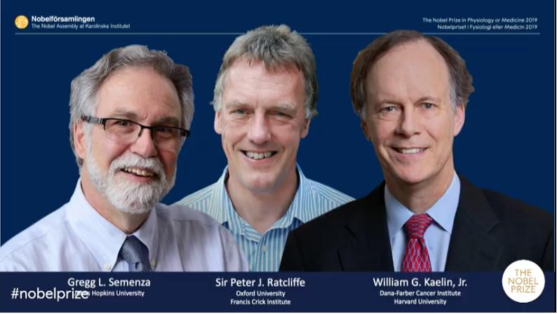 2019年度ノーベル生理医学賞は?:米英の3人セメンザ、ラトクリフ、ケーリンへ!_a0386130_18335716.png