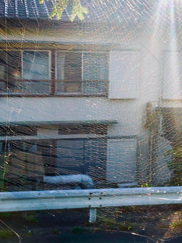 雨ニモ負ケズ_c0048536_16250282.jpg
