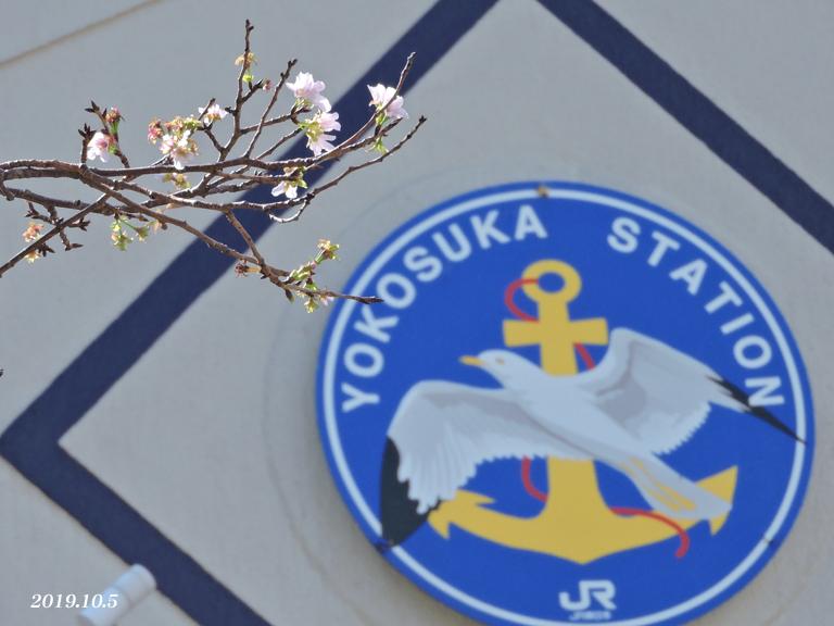 桜、開花しちゃいました。_d0251161_16444930.jpg