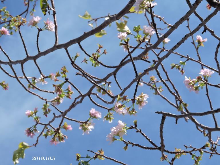 桜、開花しちゃいました。_d0251161_16462830.jpg