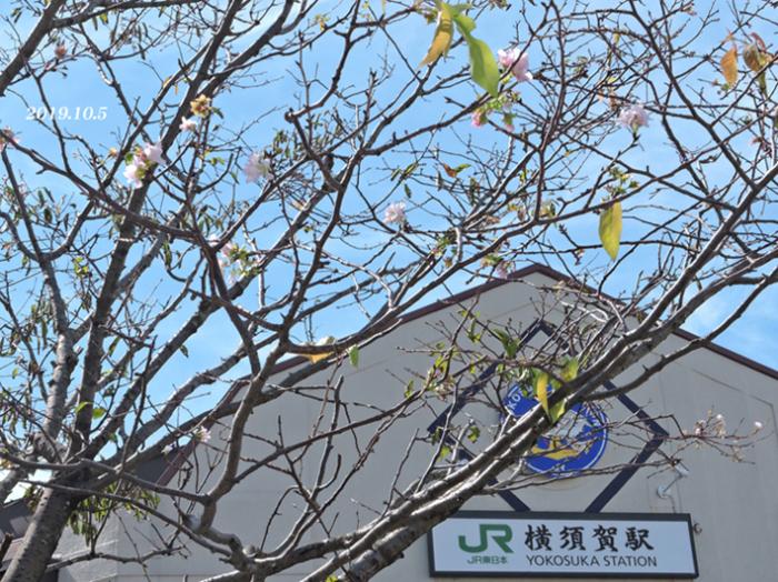 桜、開花しちゃいました。_d0251161_16513347.jpg