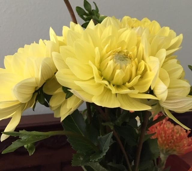 OC Wholesale Flowers の花に圧倒される_e0350971_08072931.jpg