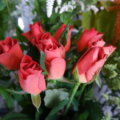 オークリーフ(オレンジ色やピンク色)_f0049672_18095550.jpg