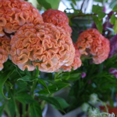 オークリーフ(オレンジ色やピンク色)_f0049672_18100516.jpg