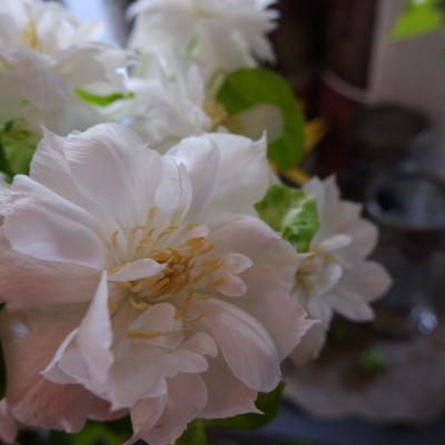 オークリーフ(オレンジ色やピンク色)_f0049672_18101823.jpg
