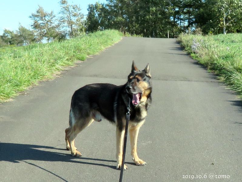 全道嘱託警察犬等訓練競技会_f0067179_14595340.jpg