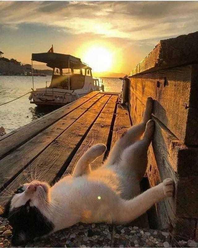 野良猫の一生は_c0027188_08322719.jpeg