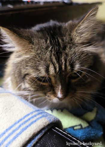 今年も「石抱きの刑」もとい「膝猫」はじめました_b0253205_16525001.jpg