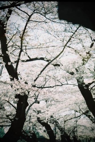 春から秋へ。_c0217406_10125535.jpeg