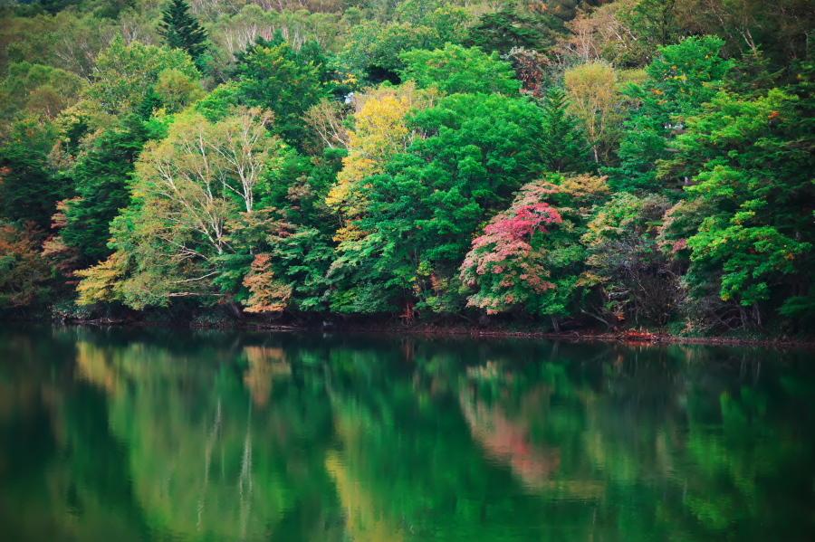 奥日光 湯ノ湖の紅葉の始まり_a0263109_10542808.jpg
