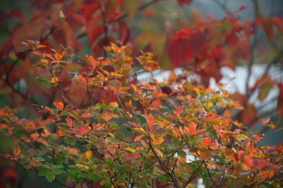 奥日光 湯ノ湖の紅葉の始まり_a0263109_10542849.jpg