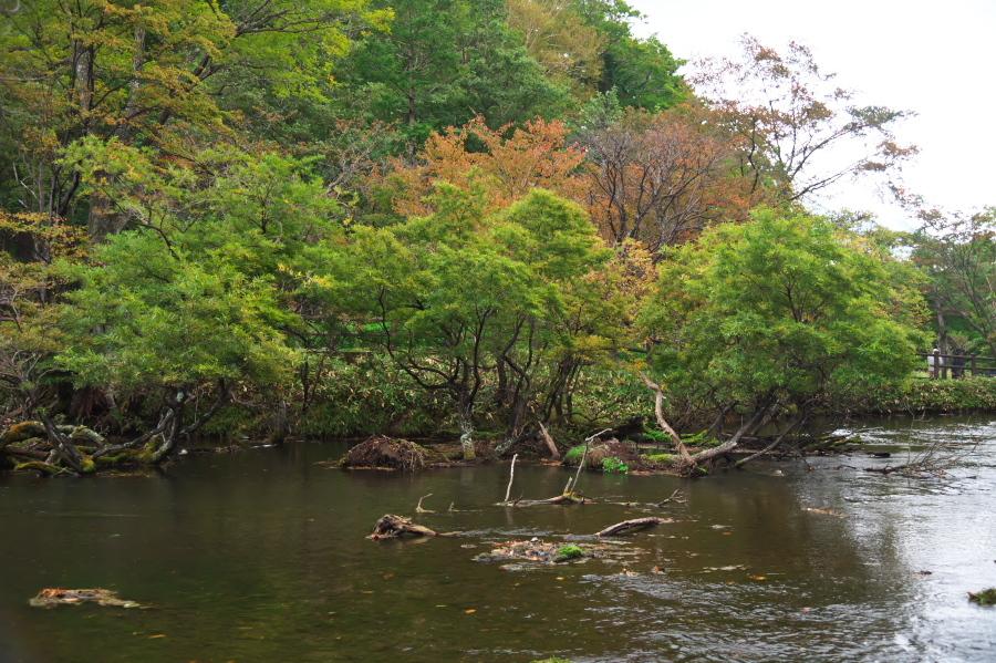 奥日光 湯ノ湖の紅葉の始まり_a0263109_10542899.jpg