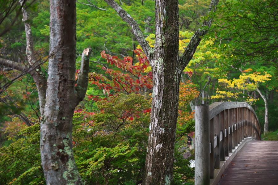 奥日光 湯ノ湖の紅葉の始まり_a0263109_10542931.jpg