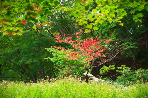 奥日光 湯ノ湖の紅葉の始まり_a0263109_10545437.jpg