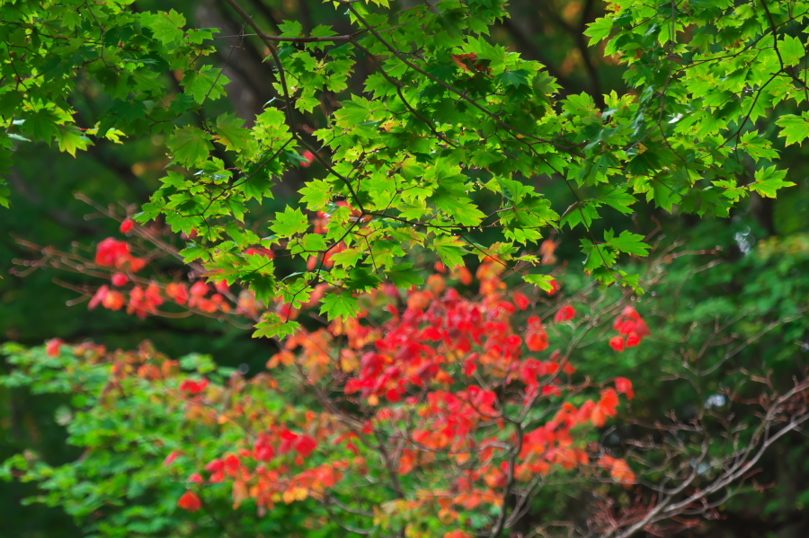 奥日光 湯ノ湖の紅葉の始まり_a0263109_10545588.jpg