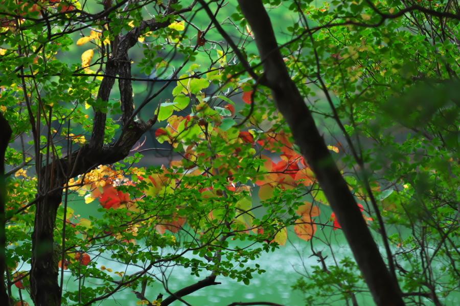 奥日光 湯ノ湖の紅葉の始まり_a0263109_10545689.jpg