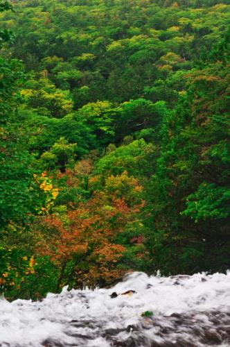 奥日光 湯ノ湖の紅葉の始まり_a0263109_10551947.jpg