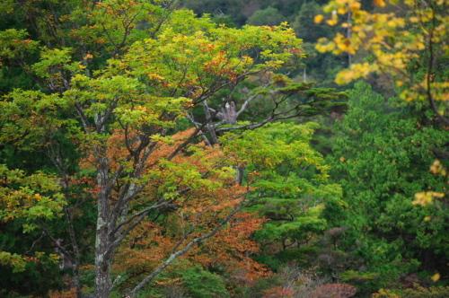 奥日光 湯ノ湖の紅葉の始まり_a0263109_10551954.jpg