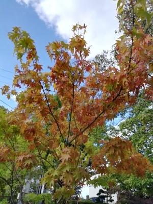 風は秋色_c0289116_19595123.jpg