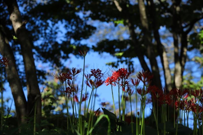 樹間に咲く_e0169421_21112157.jpg