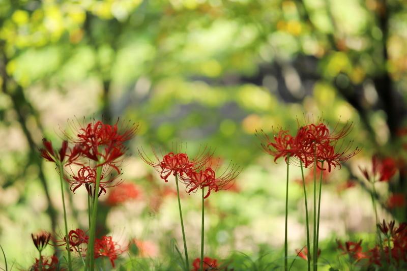 樹間に咲く_e0169421_21112202.jpg