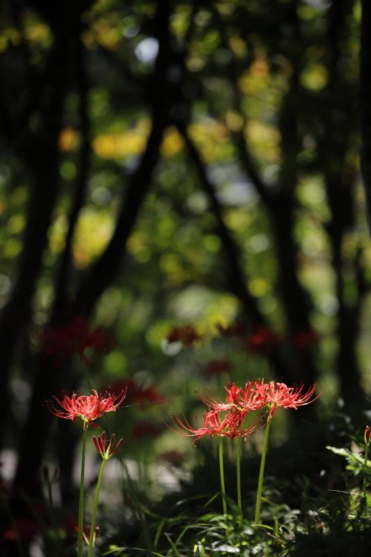 樹間に咲く_e0169421_21112225.jpg