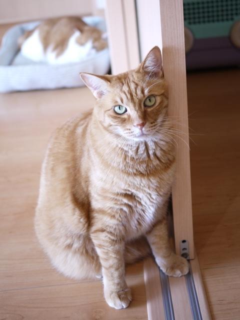猫のお留守番 きなこくん編。_a0143140_21482729.jpg