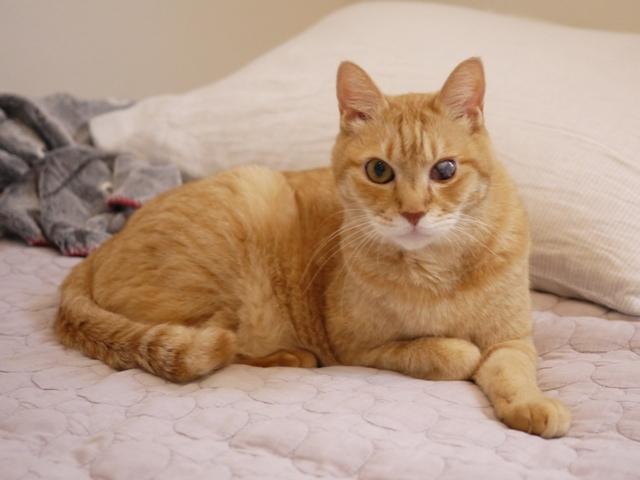 猫のお留守番 ぽぽんたくん編。_a0143140_21512651.jpg