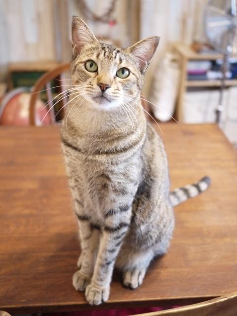 猫のお留守番 がうくん編。_a0143140_21542691.jpg