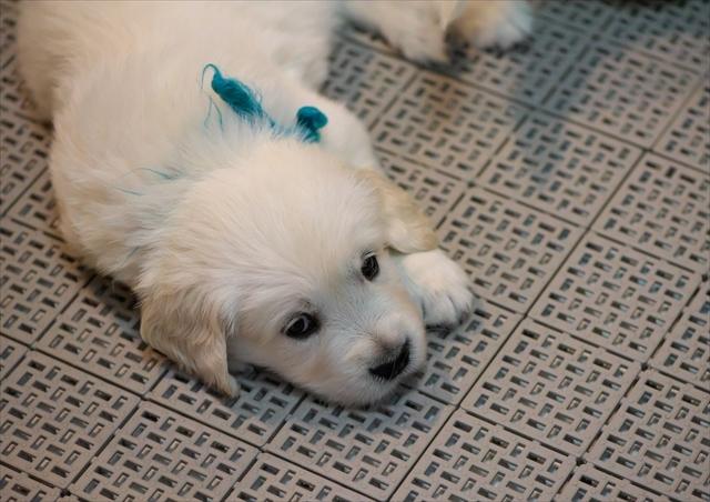 Puppy_f0018464_19282890.jpg