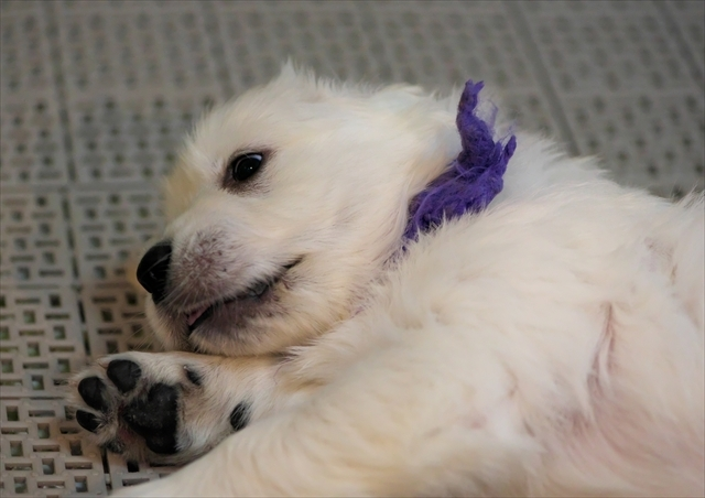 Puppy_f0018464_19282962.jpg