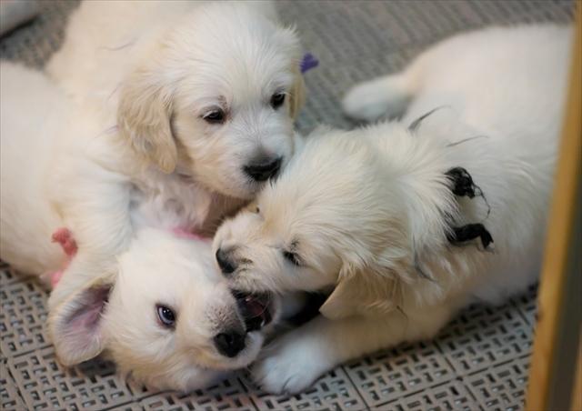 Puppy_f0018464_19282996.jpg