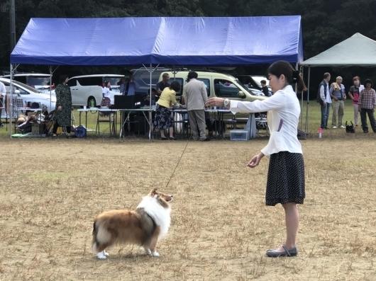 コリークラブ 神奈川&むさしの支部展_f0126965_18311901.jpg