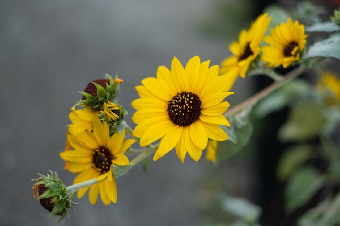 夏の終わりか、秋の初めか_a0261169_16493086.jpg