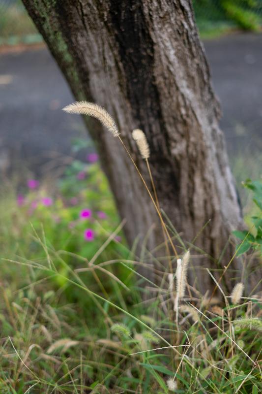 夏の終わりか、秋の初めか_a0261169_16500770.jpg