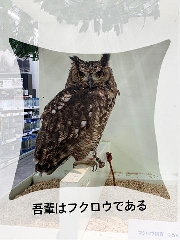 フクロウ&まおちゃん_e0040673_09192374.jpg