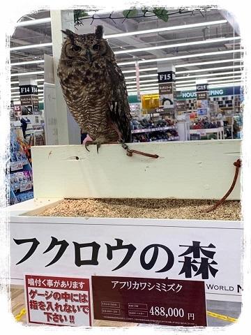 フクロウ&まおちゃん_e0040673_09201916.jpg