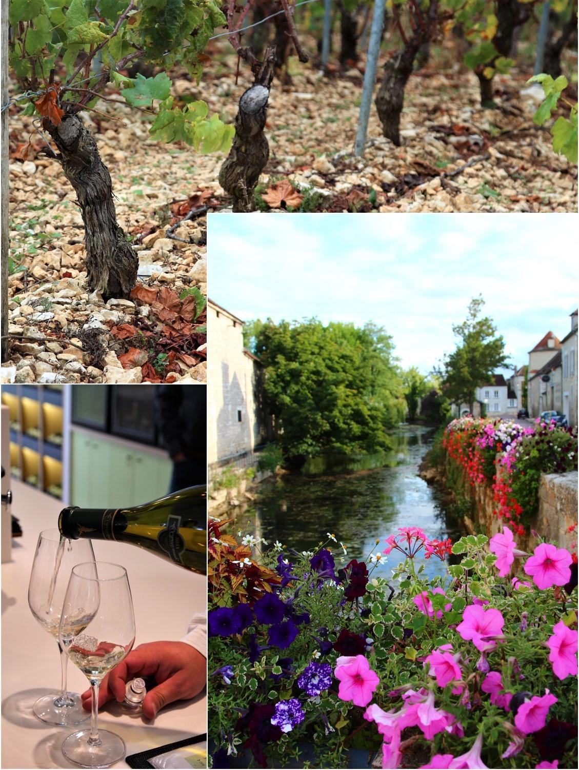 ブルゴーニュ ワイン旅_a0107981_15104957.jpg