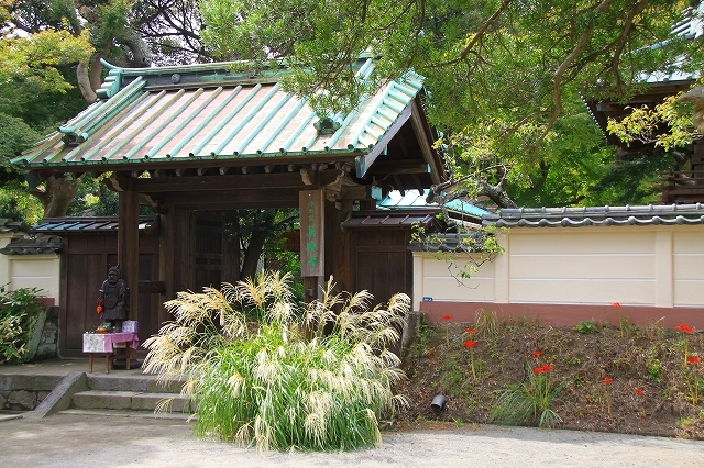鎌倉の秋の花 英勝寺の芒_f0374092_18514370.jpg
